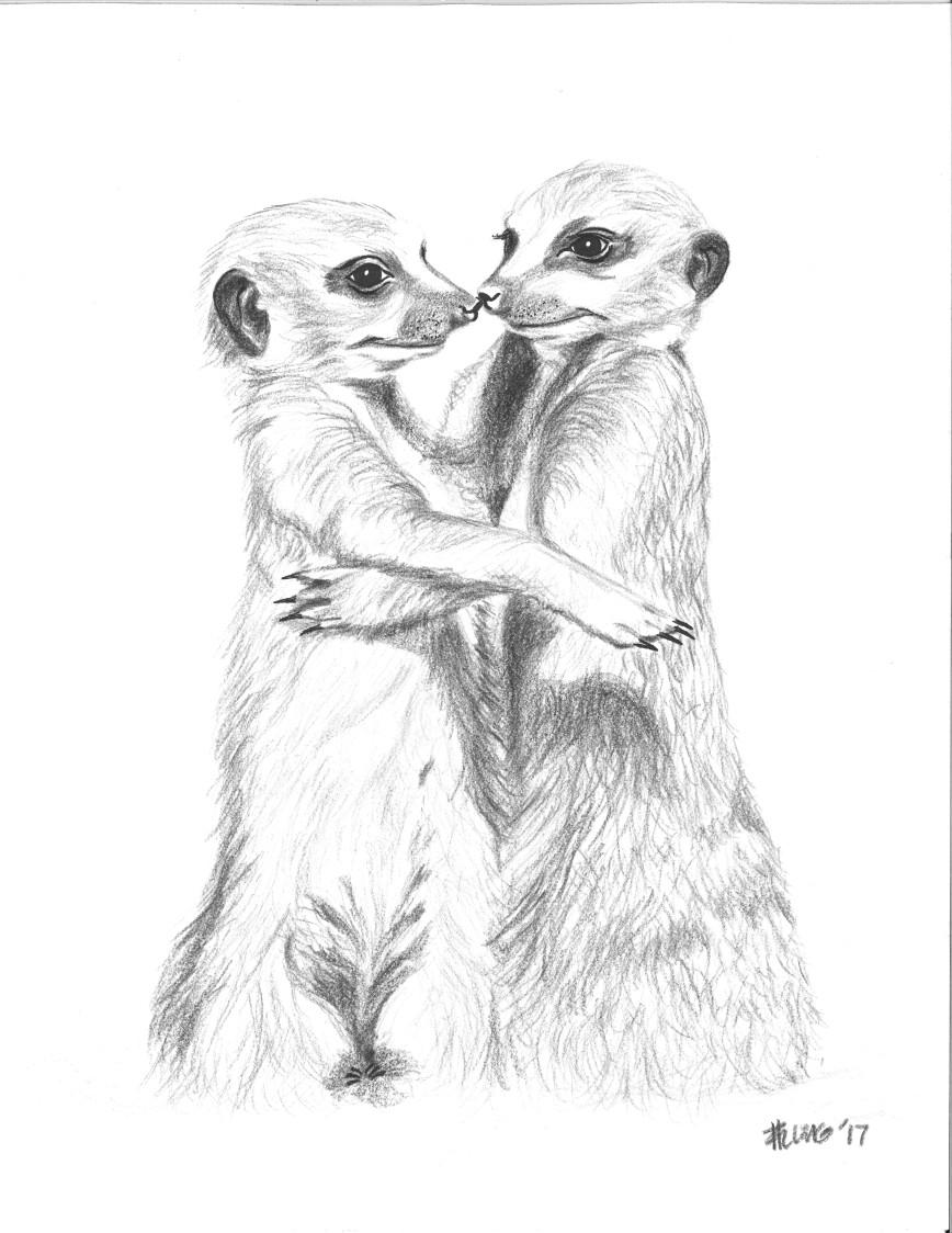 hugging_meerkats
