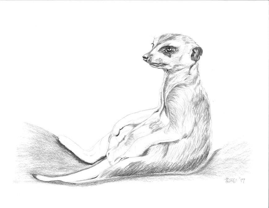 sitting_meerkat