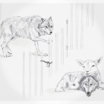 wolf_lamb_wolf_square